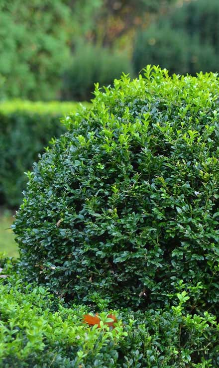 Green FX Landscaping Commercial Shrubs & Hedges